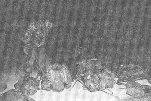 Рис.2 Проведение окончательной подготовки снаряжения разведчиков